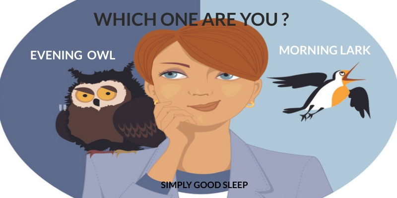 Which One Are You - an Evening Owl or a Morning Lark