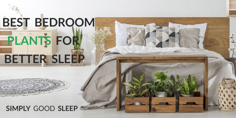 Best Bedroom Plants for Better Sleep