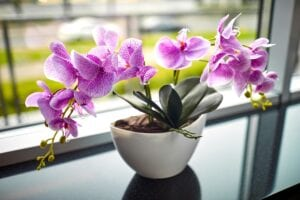Orchid Flower Bedroom Plant for Better Sleep