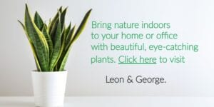 Plant Ad for Leon & George