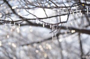 Seasonal affective disorder or SAD can occur during the cold bleak dreary winter months when icicles can be hanging from tree branches