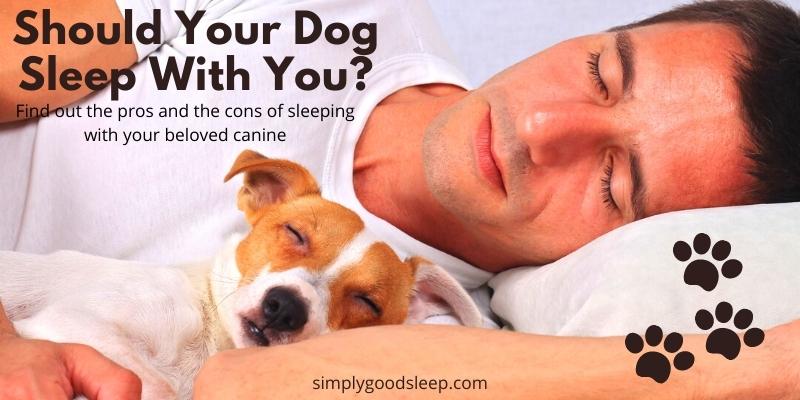 Should Your Dog Sleep with You - Simply Good Sleep