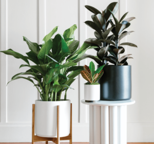 Buy Leon George Indoor Plants to Decorate Your Bedroom for Better Sleep